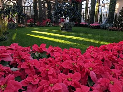 Magical Christmas - Longwood