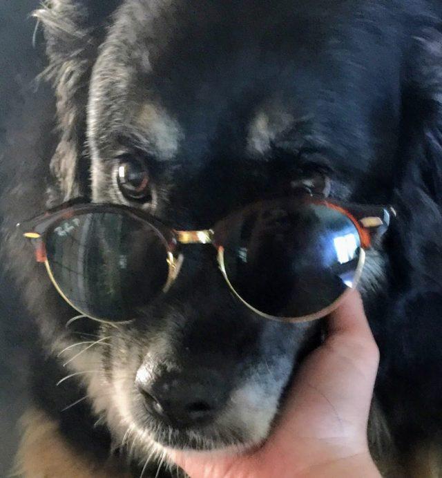 Mascot Coco Glasses